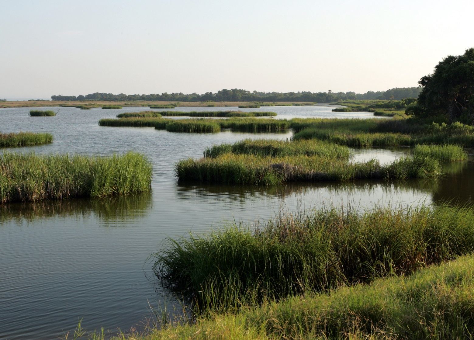 Marsh on Bulls Island at Cape Romain National Wildlife Refuge in SC. Photo courtesy of the USFWS.