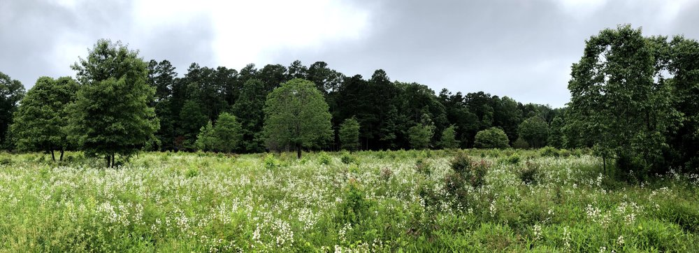 Piedmont prairie at Mason Farm Biological Reserve in Chapel Hill, NC.