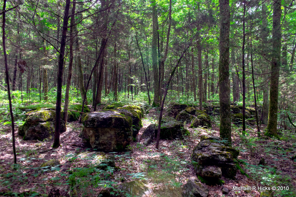 Forest with large boulders.